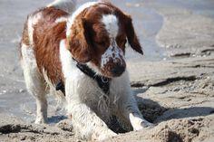 Play time at Maasvlakte strand, Rotterdam, The Netherlands Copyright: Van Geerdersbeek Photography