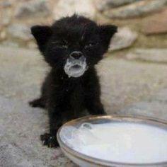 OMG!!!!! tooo cute... aww baby dwwwiiinkin milk!