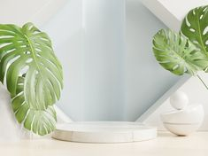 Download Podium Display With Tropical Leaf On Green Wall, 3d Rendering for free