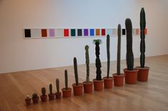 Cacti by Martin Creed | AnOther Loves