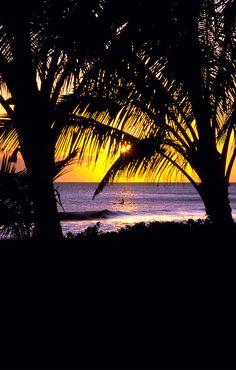 Hawaiian sunset view between palm trees