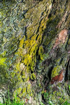 I love the patterns and textures of tree bark.