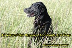 The Homestead Survival | All Natural Tick Repellent For People And Dogs | http://thehomesteadsurvival.com