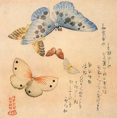 """""""Borboletas"""", da série de pinturas entitulada """"An Illustrated Collection of Butterflies"""", do artista Kubo Shunman, datado no final da era Bunka, entre os anos de 1804-1818 - Mundo-Nipo"""
