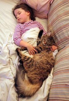 Как кошка Тула помогает девочке с аутизмом Ирис  и  Тула  вместе спят после обеда…