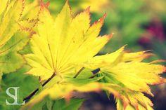 Sommergefühle - Blätter