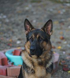 My good boy Argus.