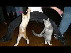 Funny dancing cats and dogs - Cute animal compilation - Check out the yellow cat at 0.51 - unbelievable!!!