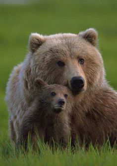 mama and cub always amazes me how such a powerful animal can be so tender