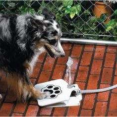 The Doggie Fountain is a cool solution for keeping your dogs water supply safe, fresh and readily available.