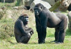 Meridian Zoological Park, Meridian #mississippi