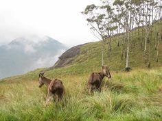 Eravikulam National Park, Kerala