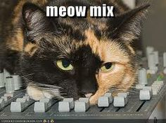 As DJ's, we completely support this cats right to drop the bass!  #Funny #Dj #cat #drop #the #bass #Meow #mix