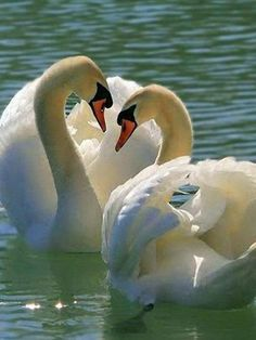 Media by - Nature Animals, Animals And Pets, Baby Animals, Cute Animals, Beautiful Swan, Beautiful Birds, Animals Beautiful, Beautiful Scenery, Foto Flamingo