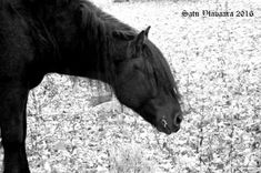Etusivu / Twitter Black And White Photography, Horses, Twitter, Artwork, Animals, Black White Photography, Work Of Art, Animales, Auguste Rodin Artwork