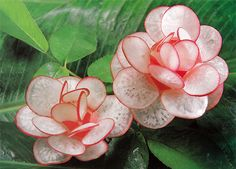 Radish Flower Carving step by step photos