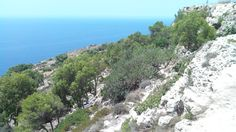 The Dingli Cliffs