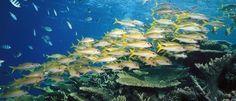Le barriere coralline più belle del mondo |I posti più belli