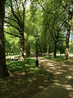 London park, trees, light and shadows