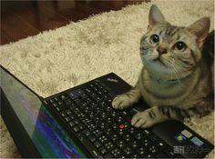 パソコンが扱えるネコさん
