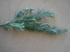 Echtes Leinkraut Knospen Kräuter künstliche Pflanze 75cm Pflanzen Dekoration