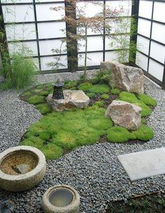 un petit jardin d'intérieur
