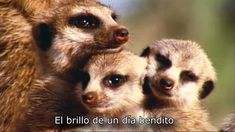 BBC - David Attenborough - Wonderful World (HD)(Subtitulado)