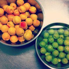 今日は、仕込みの日…。  長野の農園から、あんずと梅が届きました。 - @uneclef- #webstagram