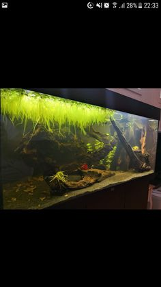 983 best aquariumland images fish tanks aquarium ideas aquascaping rh pinterest com