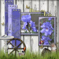 Blue Iris, layout by scrap happy