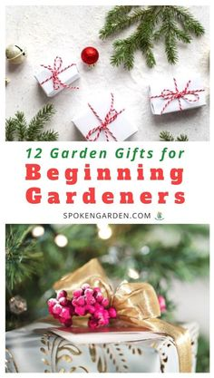Find the perfect Christmas garden gift for the beginning gardener on your holiday shopping list. Our gift guide features 12 gifts including must-have tools, informative books, and more! Winter Plants, Winter Garden, Winter Container Gardening, Christmas Garden, Garden Maintenance, Christmas Gift Guide, Christmas Ideas, Sustainable Gifts, Blooming Plants