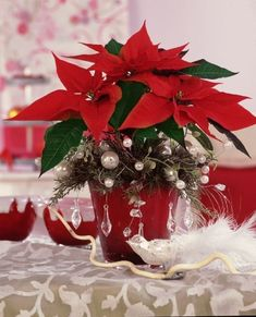 Poinsettia Gwiazda Betlejemska by Stars For Europe Poinsettia Plant, Christmas Poinsettia, Christmas Flowers, Christmas Wreaths, Christmas Crafts, Christmas And New Year, Christmas Wedding, Christmas Time, Merry Christmas