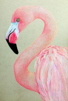 Artful Evidence: Coloured Pencil Sketch - Pink Flamingo