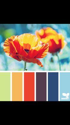 Orange red blue color schemes nice tones flower