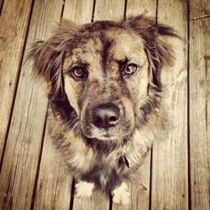 My pup Boe. I found him in an abandoned shed freezing in the snow. He's as much of a mutt as he is a mush :) #dog #mutt #mix