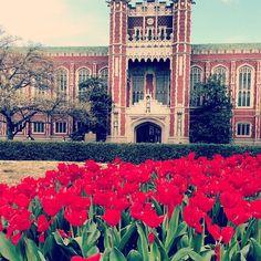 Oklahoma University campus