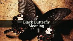 Black Butterfly Meaning – the black butterflies are beautiful creatures. They mostly are considered an omen. They symbolize only death, rebirth and freedom.
