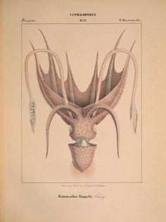 Mollusques meÌditeraneÌens [!] GeÌ ACnes :Impr, des sourds-muets,1851. biodiversitylibrary.org/page/33591504