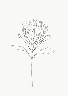 One single line is used to make a delicate flower. Credit: Emma Ryan Protea single line drawing Line Drawing Tattoos, Flower Line Drawings, Botanical Line Drawing, Line Flower, Line Tattoos, Tattoo Drawings, Line Art Flowers, Line Drawing Art, Drawing Flowers