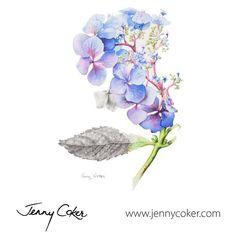 Wild Blue Hydrangea | Watercolour Botanical | Original Artwork |