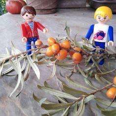 Ahoj kamarádi, naši Igráčkové Jenda a Jirka se rozhodli udělat si zásobu vitamínu C na zimu. Nejprve otrhávali oranžové plody rakytníku – šlo to pomalu a větvičky se svými ostny docela píchaly. Po dvou dnech se podařilo igráčkům natrhat celý kbelíček plodů. A teď už to bylo snadné. Nejprve pomlít na babiččině strojku, poté získanou šťávu lehce ohřát a smíchat s cukrem. Nakonec nalít sirup do čistých lahví a dát do sklepa. To bude zdravé pití na celou zimu. Vegetables, Food, Essen, Vegetable Recipes, Meals, Yemek, Veggies, Eten