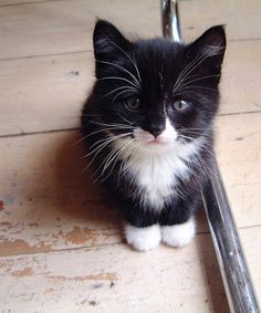 Awww looks like my baby Roger when he was a kitten