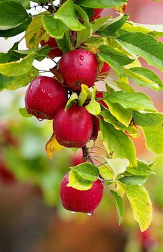 Nutrition For Weight Loss Woman - Nutrition Quotes Telugu - Fish Nutrition Facts - Nutrition Facts Vegetables - Fruit And Veg, Fruits And Vegetables, Fresh Fruit, Beautiful Fruits, Beautiful Flowers, Fruits Photos, Fruit Photography, Delicious Fruit, Fruit Art