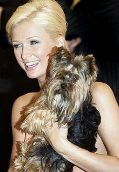 Paris Hilton and Yorkie Cinderella