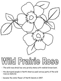 wild prairie rose coloring page united states activities - Coloring Page United States