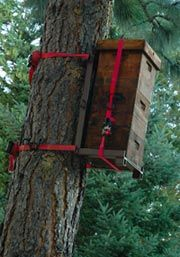 Tree Hive Bees | Nonprofit bee research and education