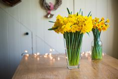 100 Golden Christmas Daffoldils with their foliage