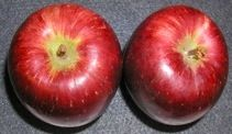 The Masanova apple is medium sized, juicy and crisp. It is an Empire-cross made in 1974 by one of Canada's most prolific fruit breeders. Crisp, Canada, Fruit, Medium, How To Make, Food, Meal, Essen