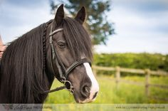 Horse portrait session, My Horse and Me. Black Welsh Section D Pony