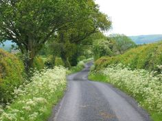 "pagewoman: "" Hothersall Lane, Longridge, Lancashire, England by Sue Bristo """